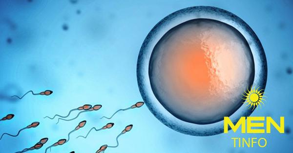 Thời gian kiêng xuất tinh ngắn: chiến lược tiềm năng trong cải thiện chất lượng tinh trùng