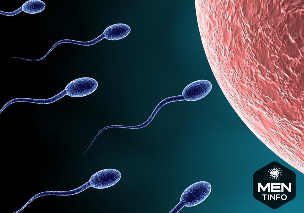 Ảnh hưởng của chất lượng tinh trùng tới sự phát triển thai nhi như thế nào?